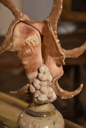 Italian mounted spider conch shell