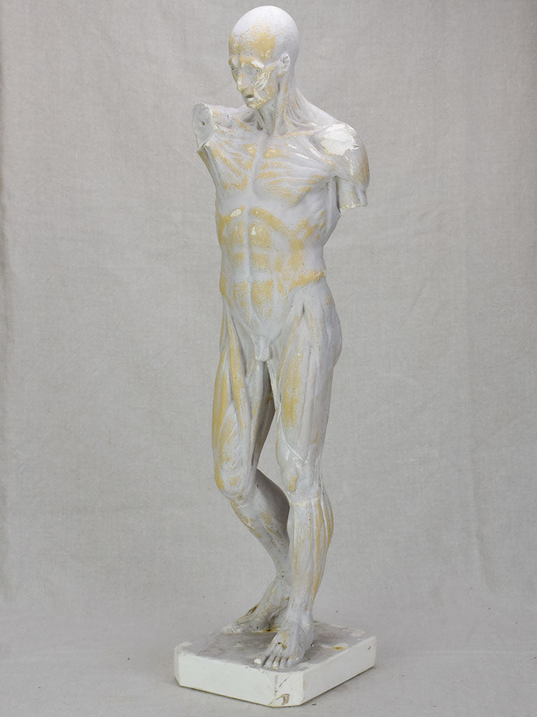 Plaster anatomical sculpture from the early twentieth century 29¼""