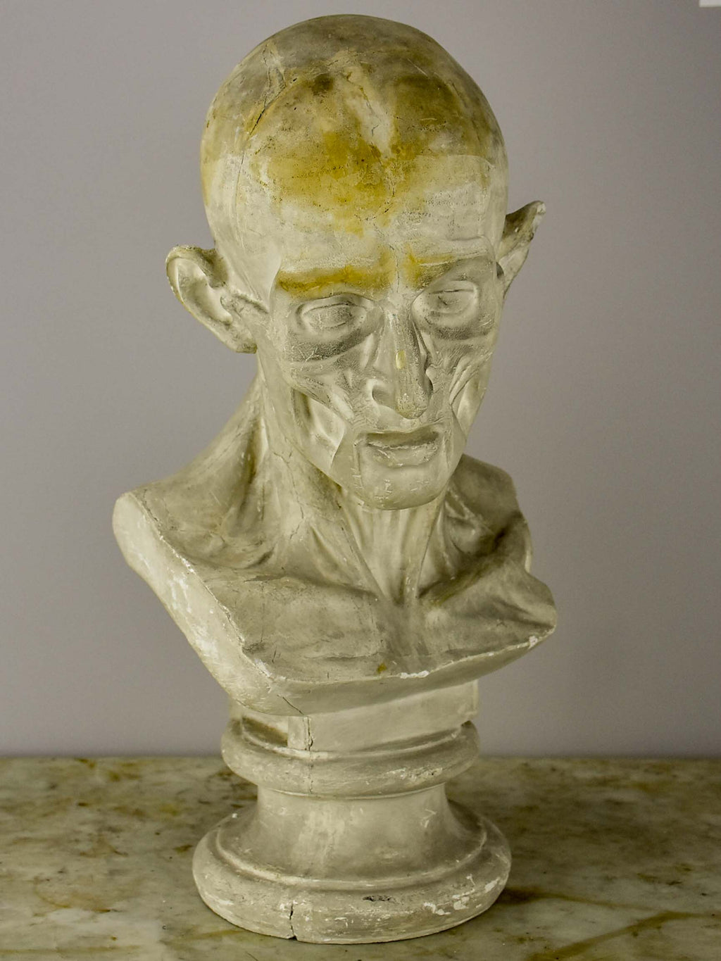 19th Century French plaster male anatomical bust