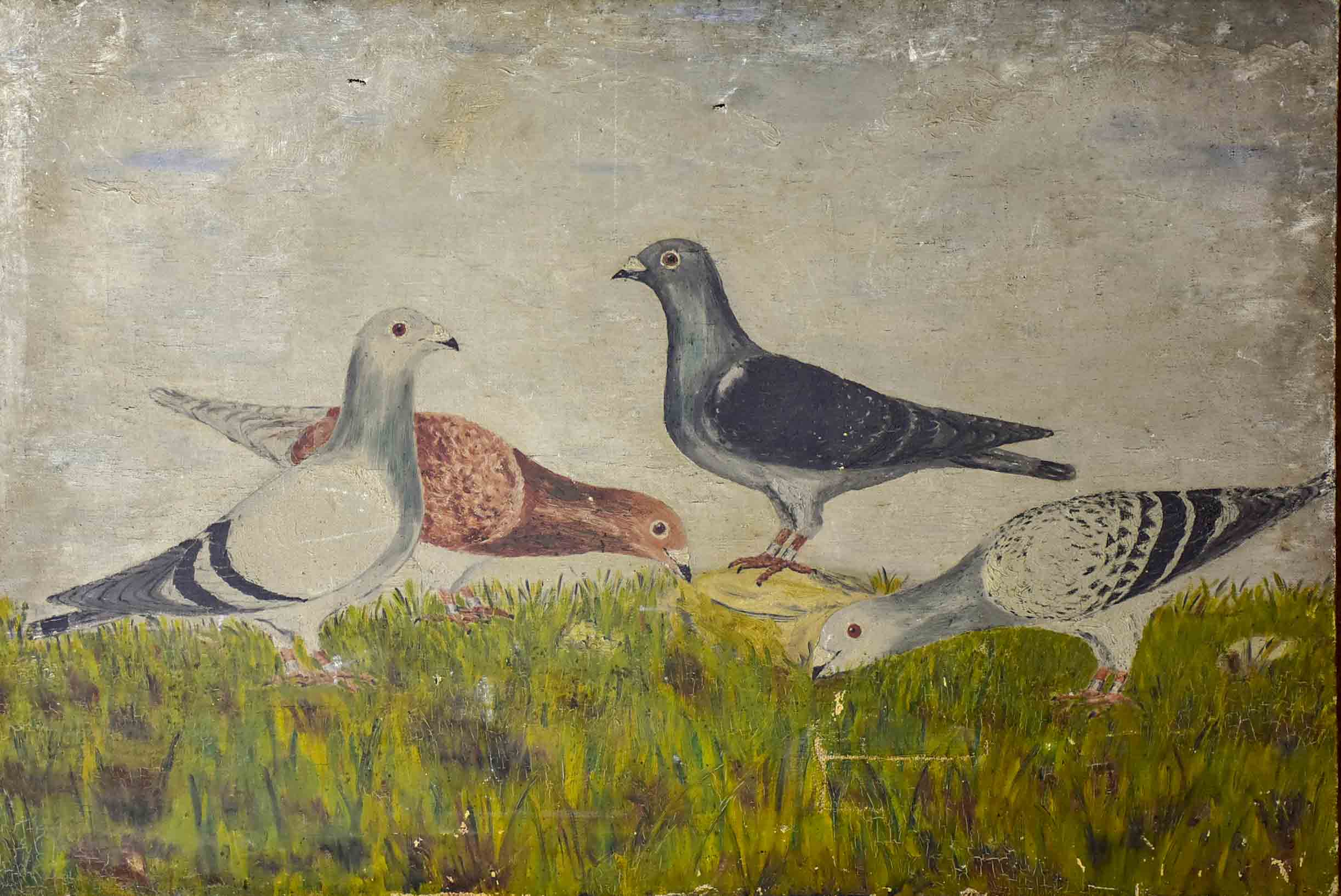 Antique French painting of pigeons 21 ¾'' x 32 ¼''