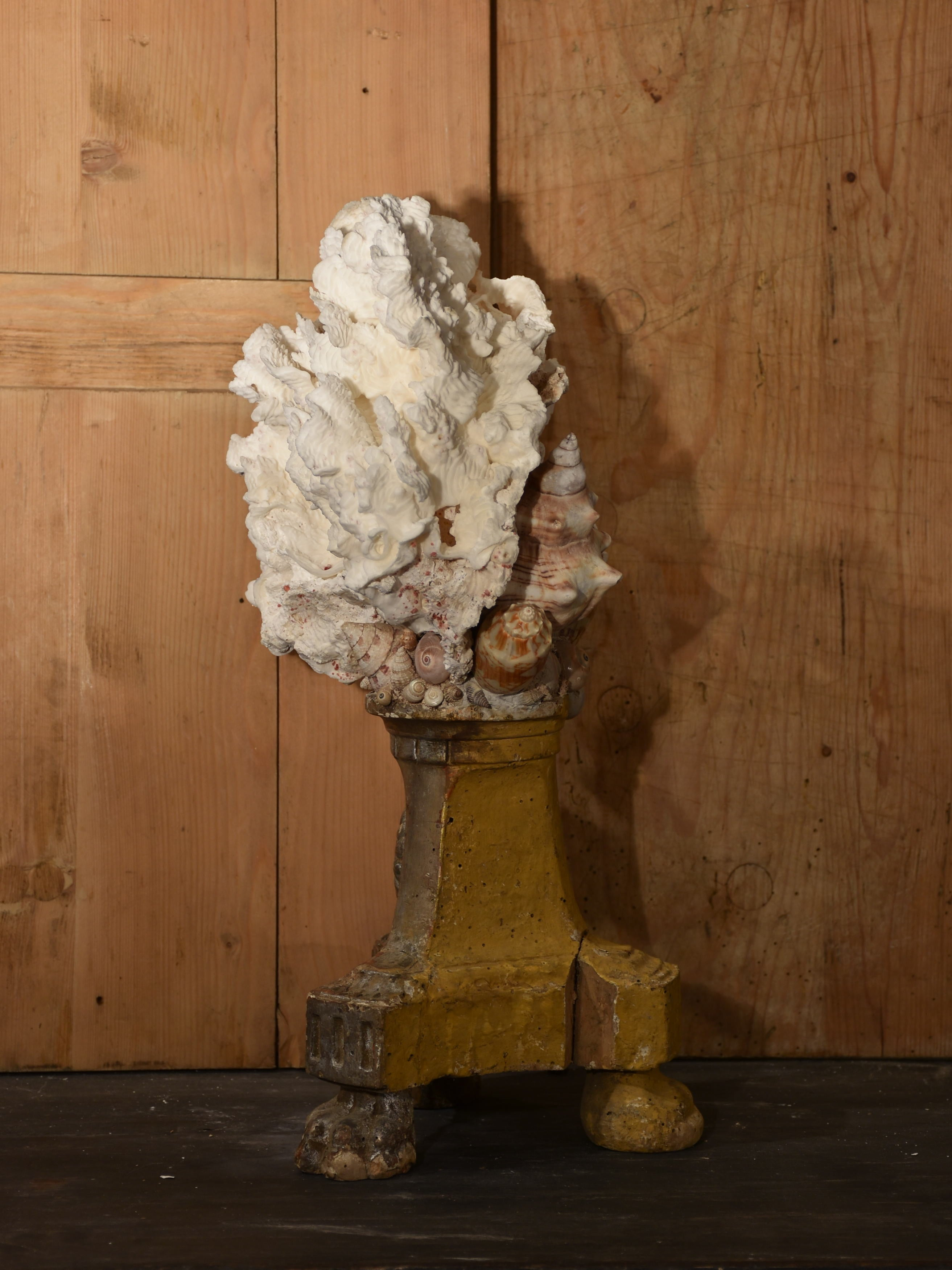 Mounted Coral and shell specimens on antique base