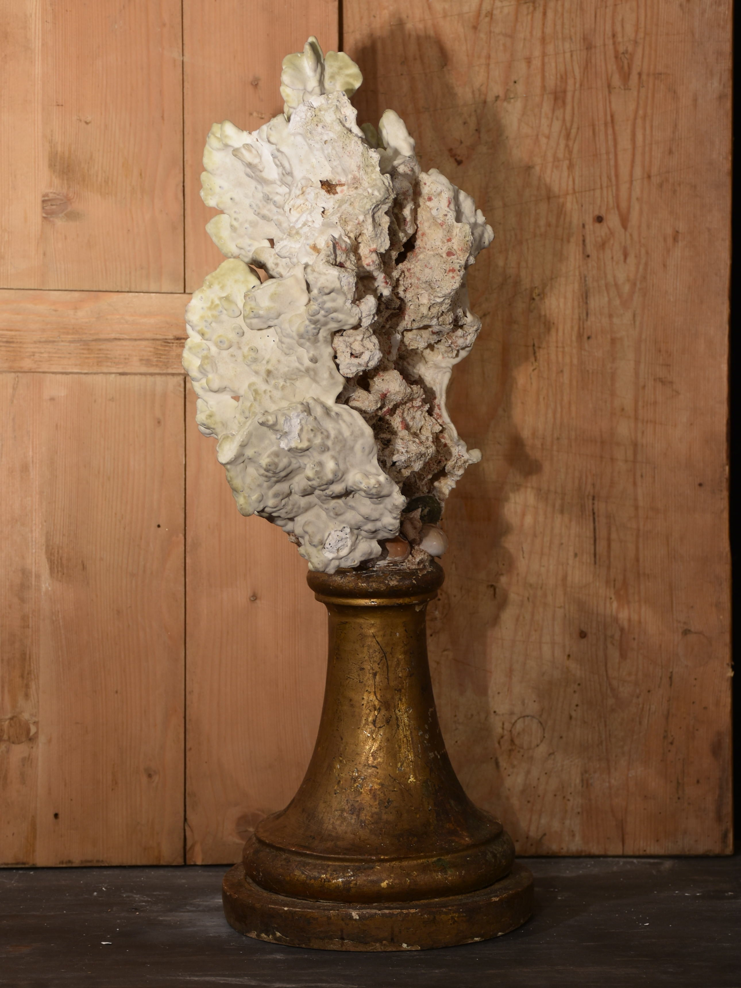Mounted Coral specimens on antique fluted base