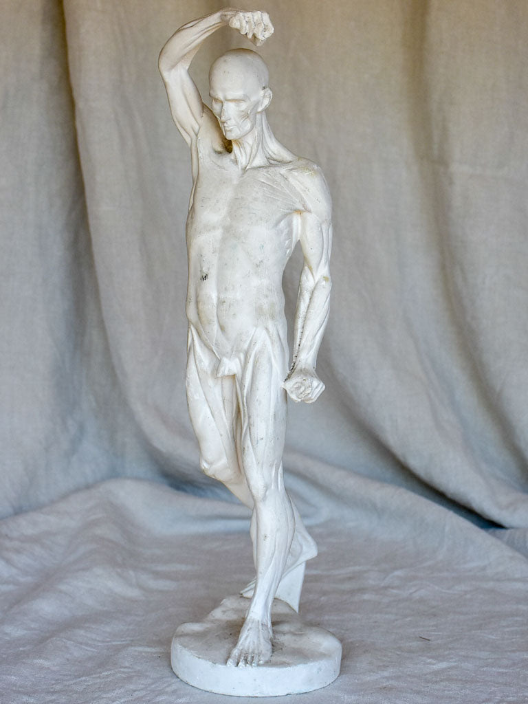 Antique French anatomical sculpture of a man in plaster