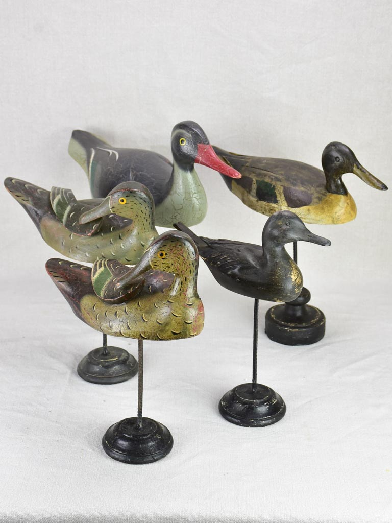 Collection of five hunting decoy ducks mounted on wooden blocks