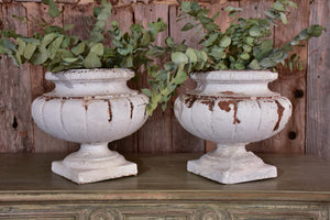 Two vintage French garden urns with white patina