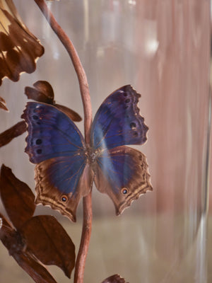 Napoleon III glass dome with butterflies