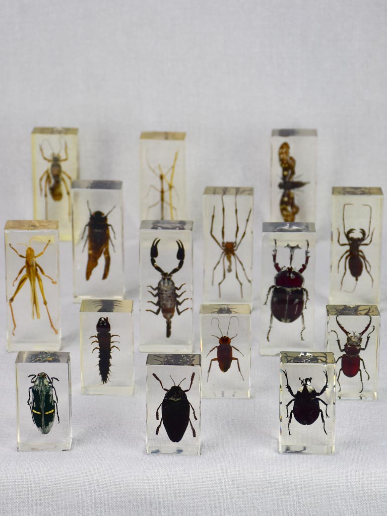 "Collection of 15 preserved insects embedded in acrylic 2¾"" - 4¼"""