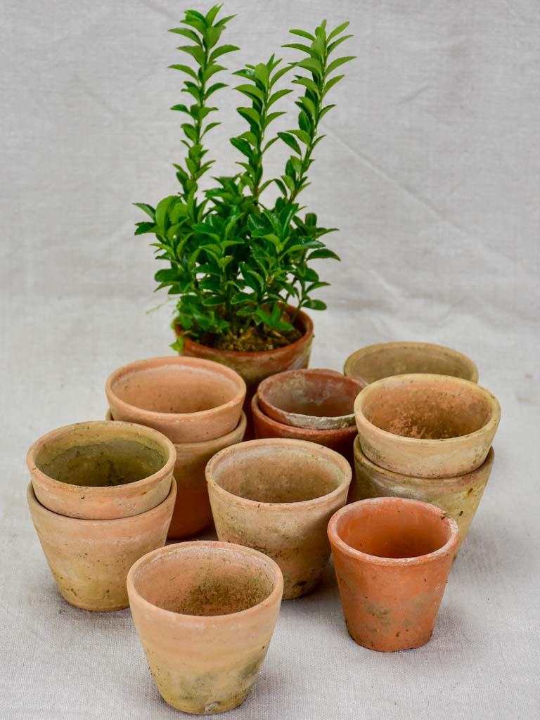 Collection of twelve small antique French terracotta pots 3¼""