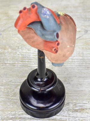 Antique French model of a heart on a black stand