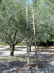 Vintage French orchard ladder