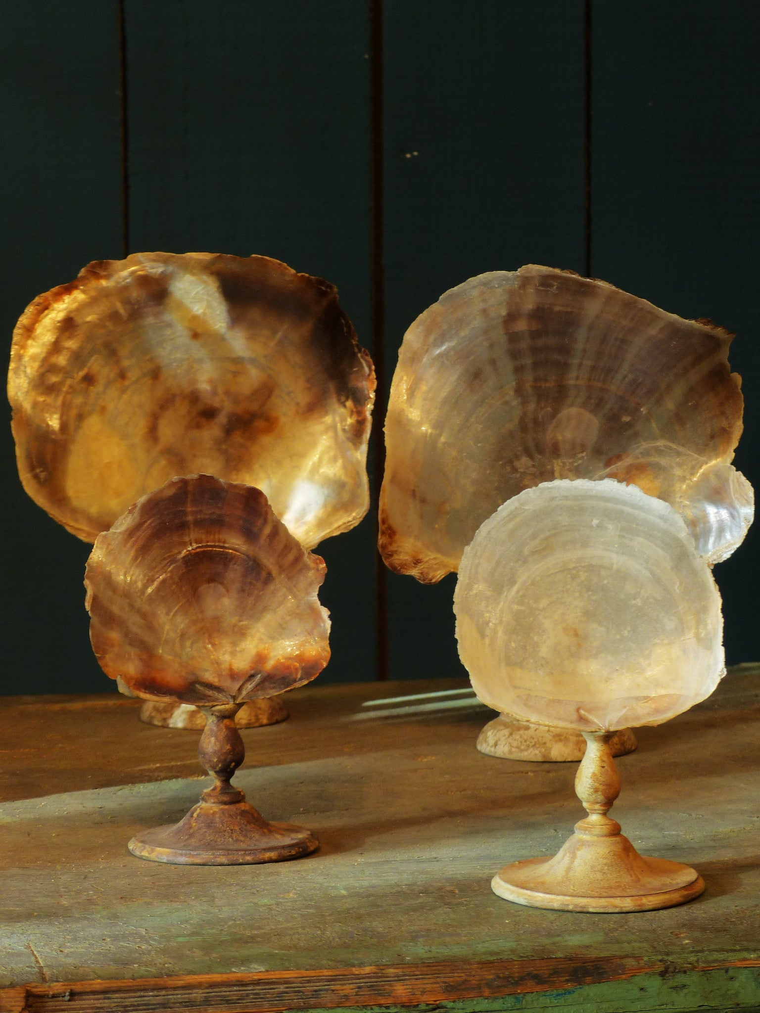 Collection of 4 mounted French sea shells - 19th century