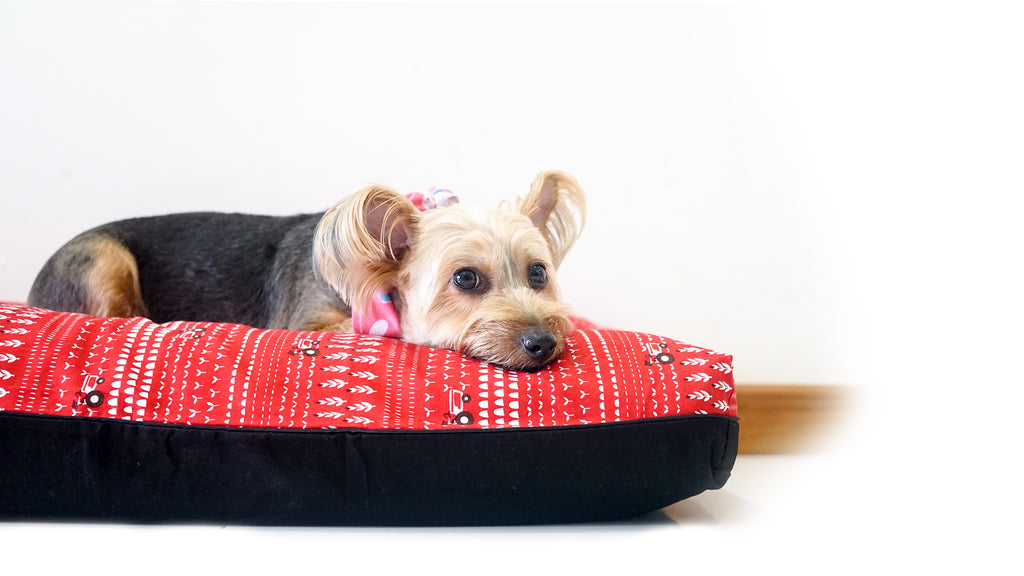 DreamCastle Natural Dog Bed | Velvety Vermillion Bright Red & Black Coloured Dog Bed