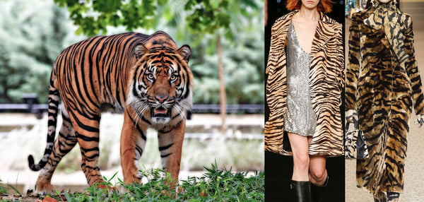 The tiger and examples of tiger print in fashion