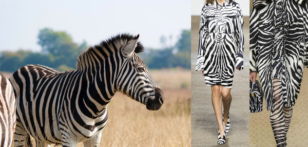 A zebra in the wild next to fashionable zebra print