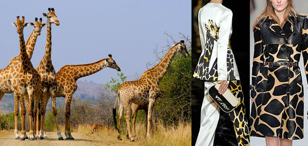 A giraffe family inspired designers for their runway fashion
