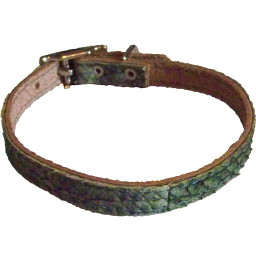 True Walleye Fish Leather Cat Collar