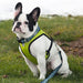 RC Pets Cirque Harness - Critter Country Supply Ltd.