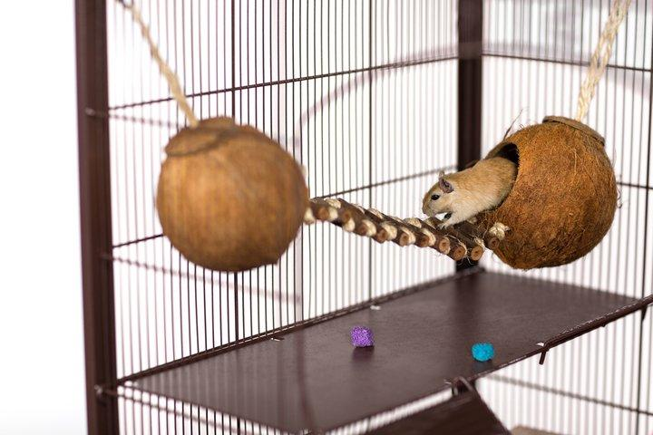 Prevue Pet Products Naturals Double Coconut Walk for Small Animals & Birds - Critter Country Supply Ltd.