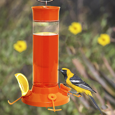 Perky-Pet® Fruit Trio Oriole Nectar Feeder - Critter Country Supply Ltd.