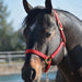 "Hamilton® 1"" Quality Halter (No Snap at Throat) - Critter Country Supply Ltd."