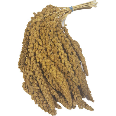Canadian Spray Millet - 8 Count (Bulk) - Critter Country Supply Ltd.