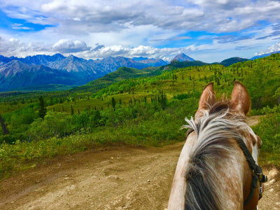 Arctic Horse Trails: Purinton Creek Trail, Alaska