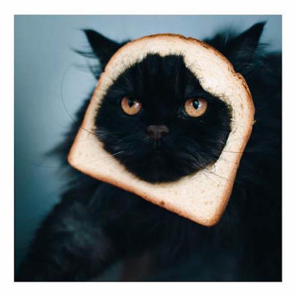 For When I Get Peckish Cat Greeting Card