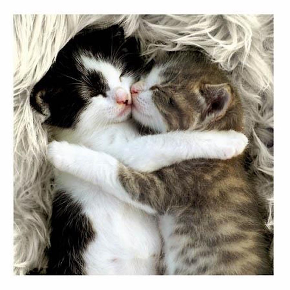 Snuggle Up Cat Greeting Card