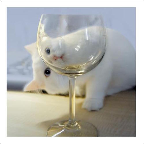 Wine O'Clock Cat Greeting Card