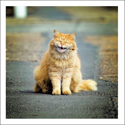 Too Funny for Words Cat Greeting Card
