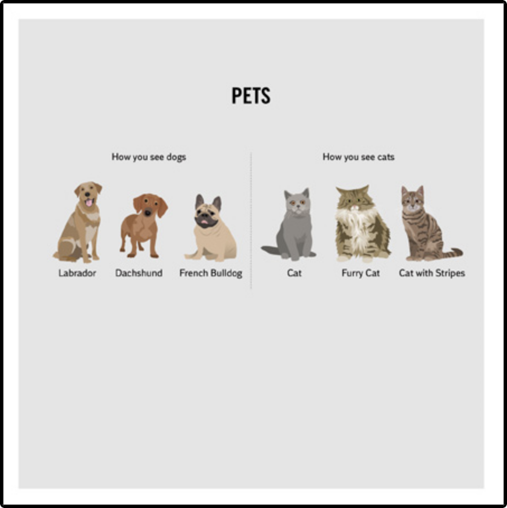 Pets Funny Cat & Dog Greeting Card
