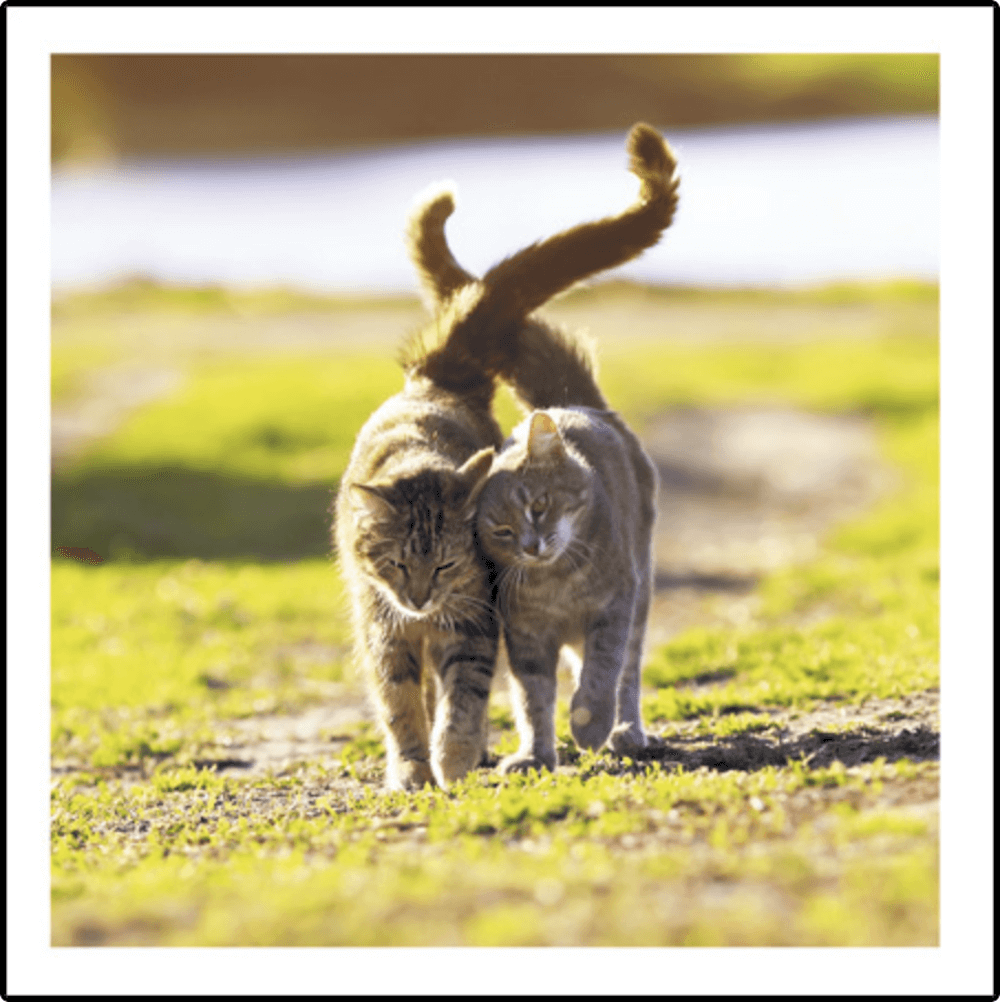 Walking on Sunshine Cat Greeting Card