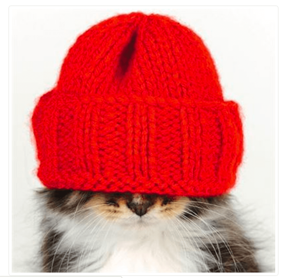 Cat in a Red Hat Blank Greetings Card