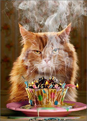 Another Year Funny Cat Birthday Card