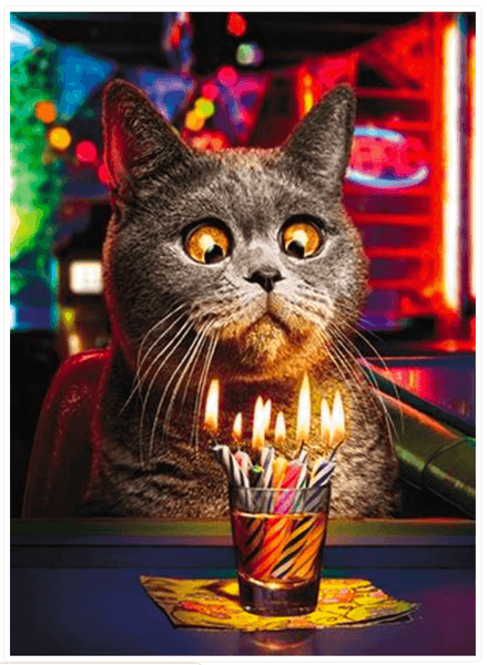 Make a Wish Funny Cat Birthday Card