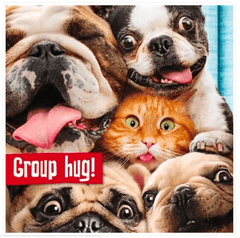 Group Hug Funny Cat & Dog Birthday Card