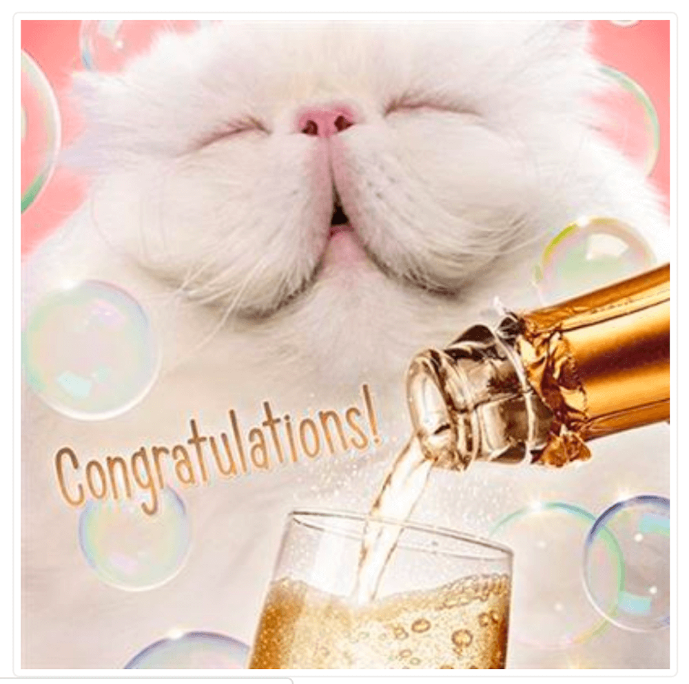 Congratulations White Cat Greetings Card