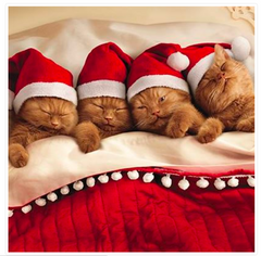 Kittens in Bed Cat Greeting Christmas Card