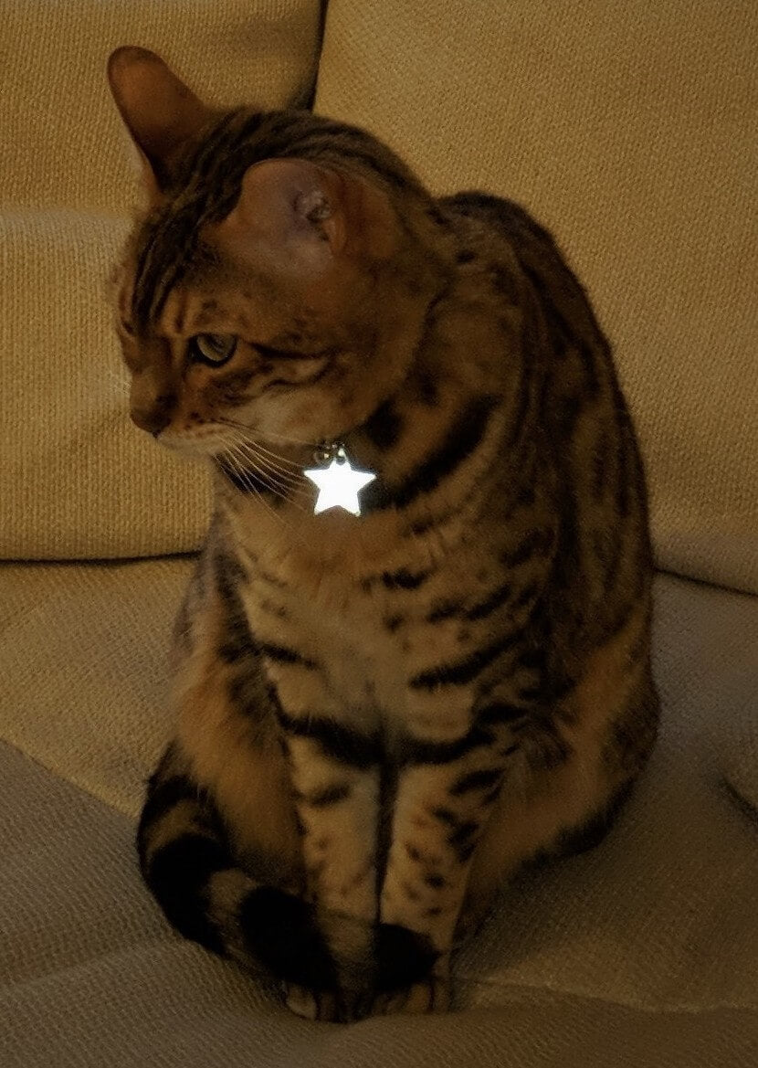 Kittyrama Reflective Collar Charm