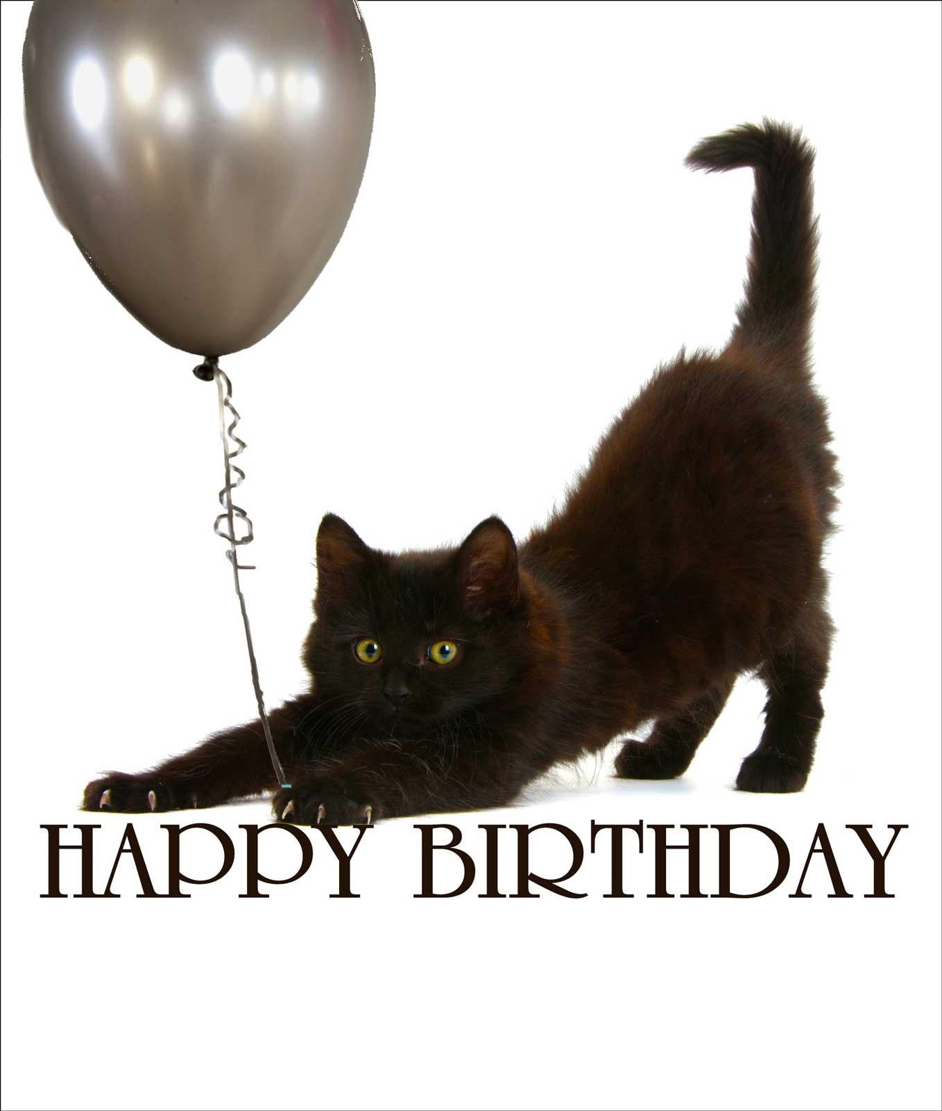 Happy Birthday Kitten Birthday Card  PURRFECT CAT GIFTS