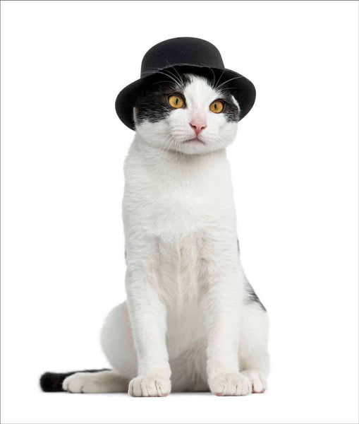 Cat in a Bowler Hat Greeting Card