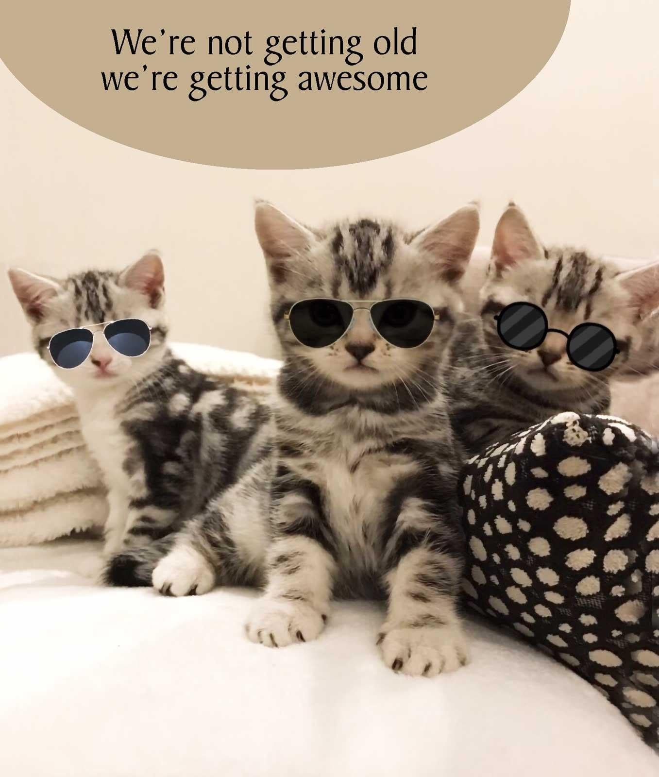 Getting Awesome Cat Birthday Card