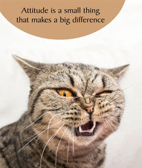Attitude Greeting Cat Card