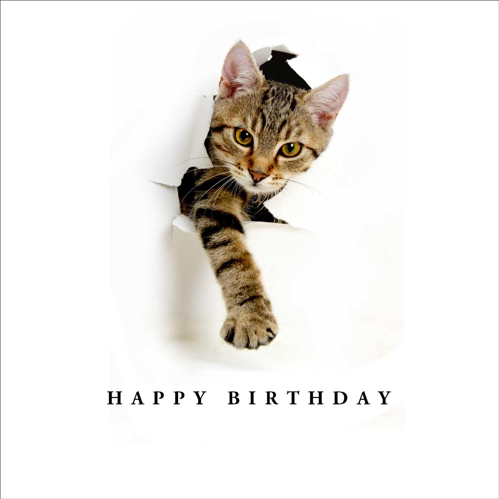 Birthday Breakthrough Cat Birthday Card