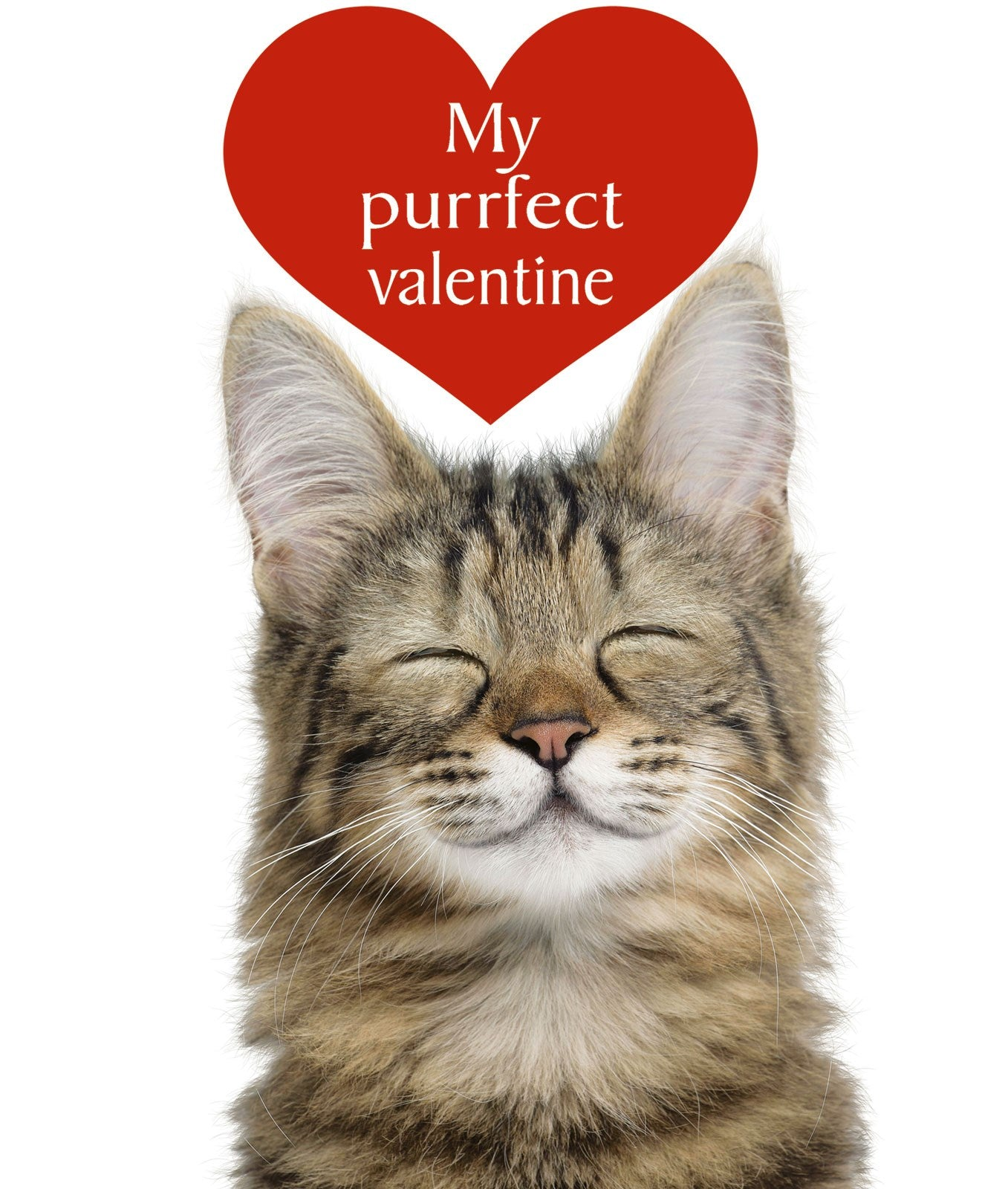 Purrfect Valentine Cat Greetings Card
