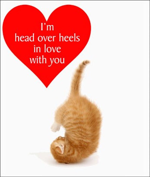 Head Over Heels Cat Greetings Card