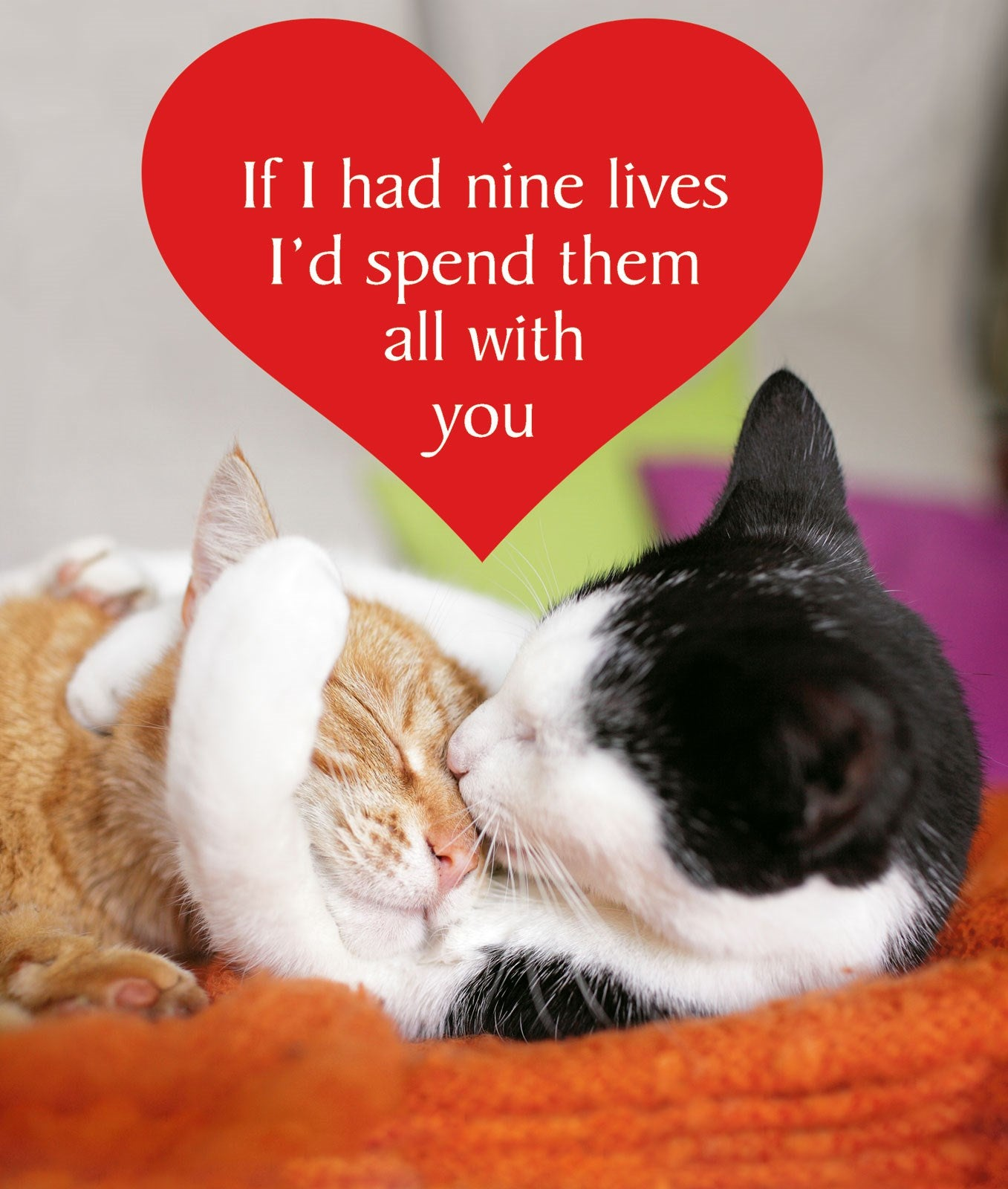 Nine Loves Cat Greetings Card