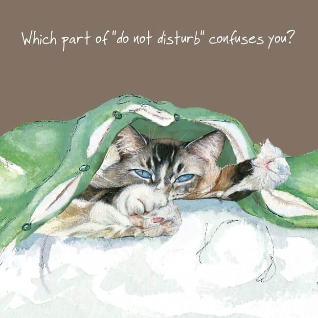 'Confuses You' Cat Greeting Card by Anna Danielle