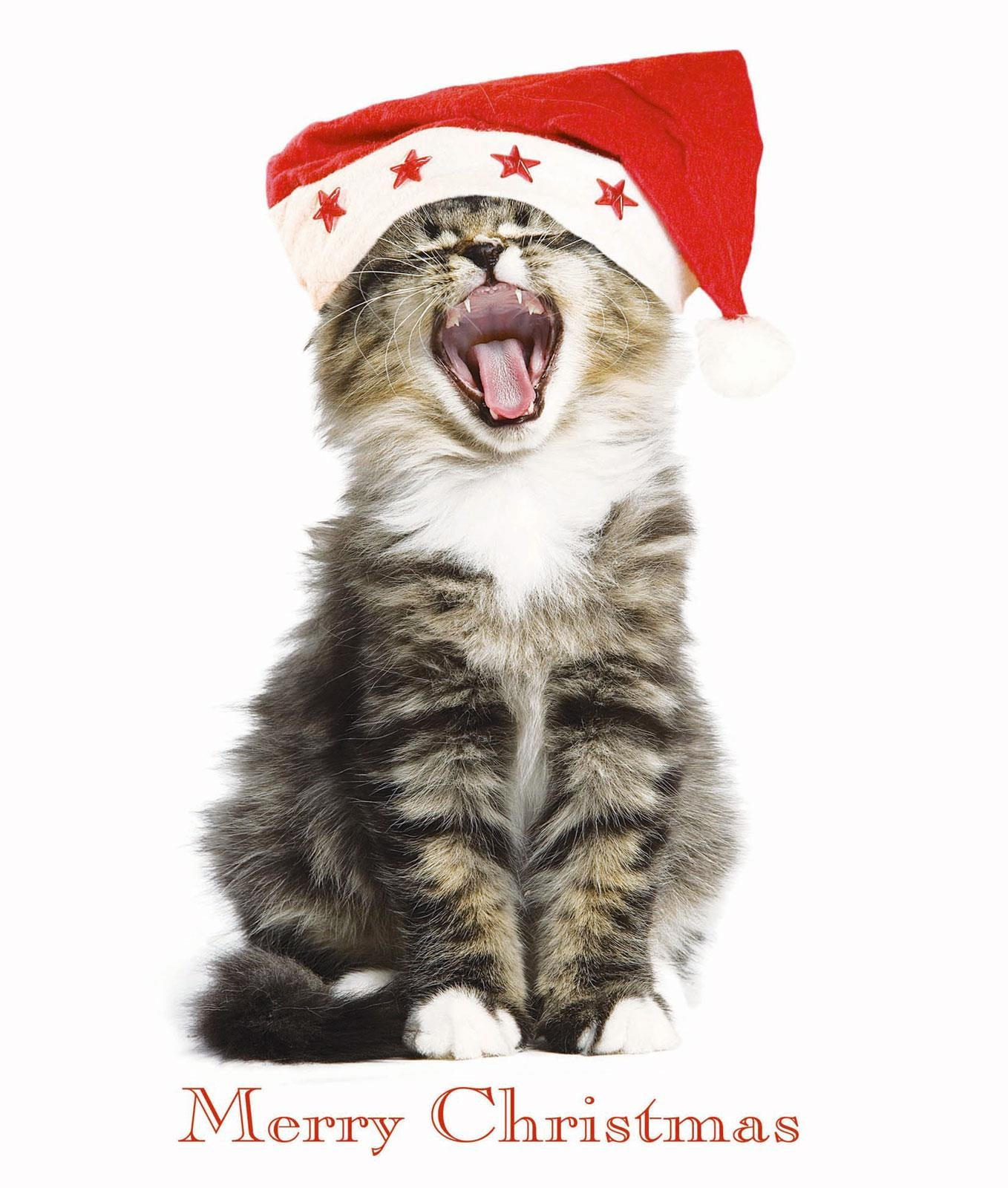 Kitty Chorus Cat Christmas Greeting Card
