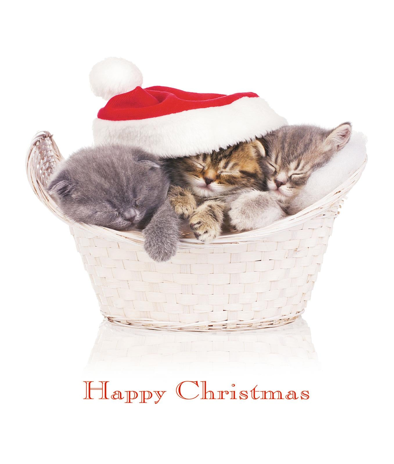 A Basketful of Joy Cat Christmas Greeting Card